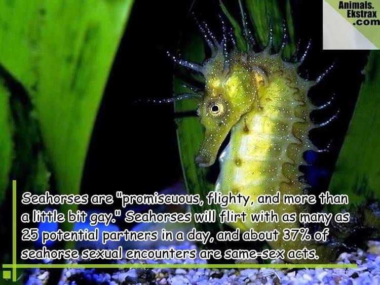 Seahorse-Green-Dark-HD