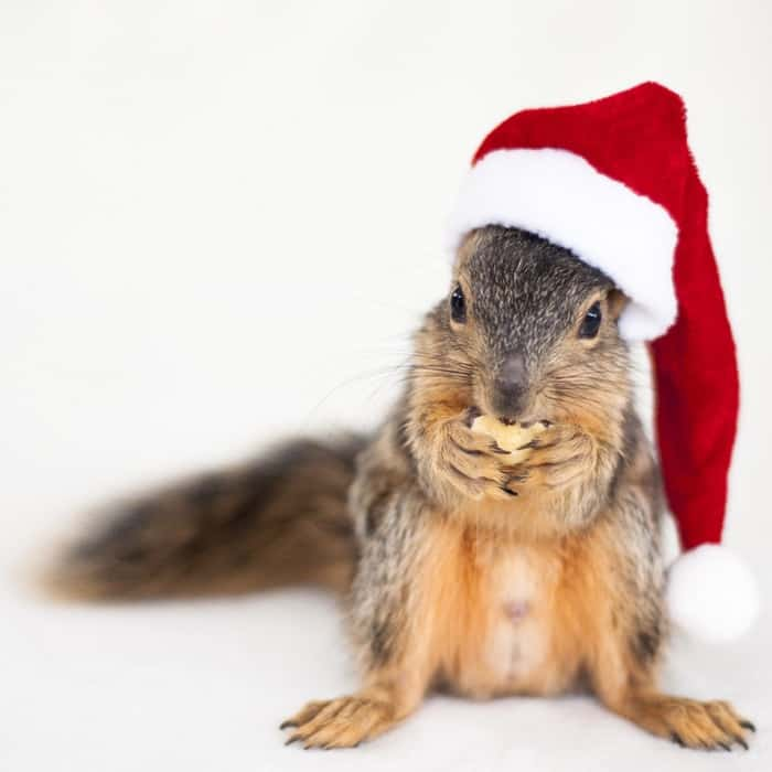 animals in christmas (12)