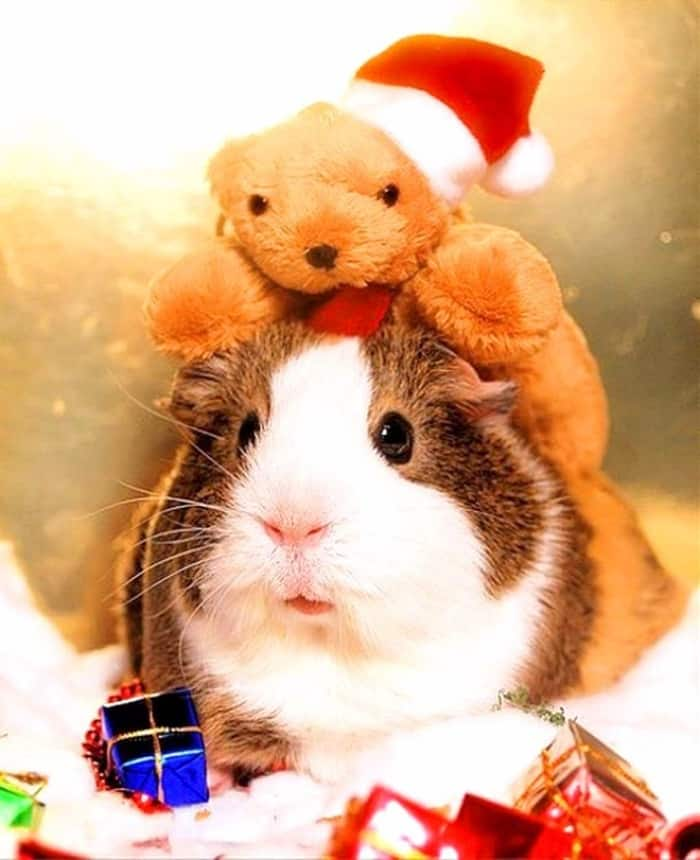 animals in christmas (15)