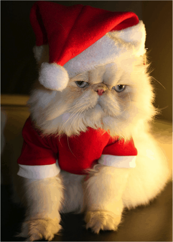 animals in christmas (18)
