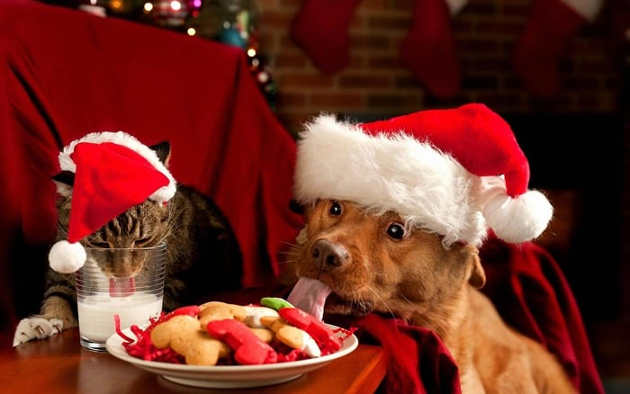 animals in christmas (20)