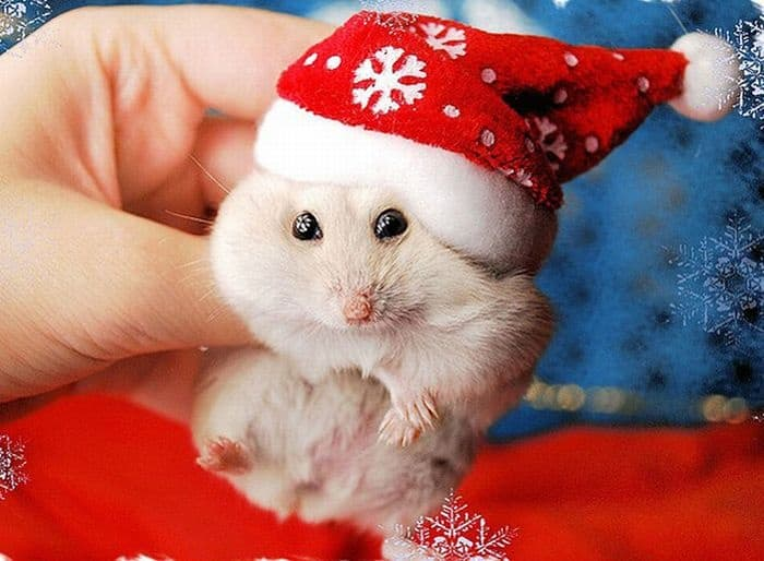 animals in christmas (22)