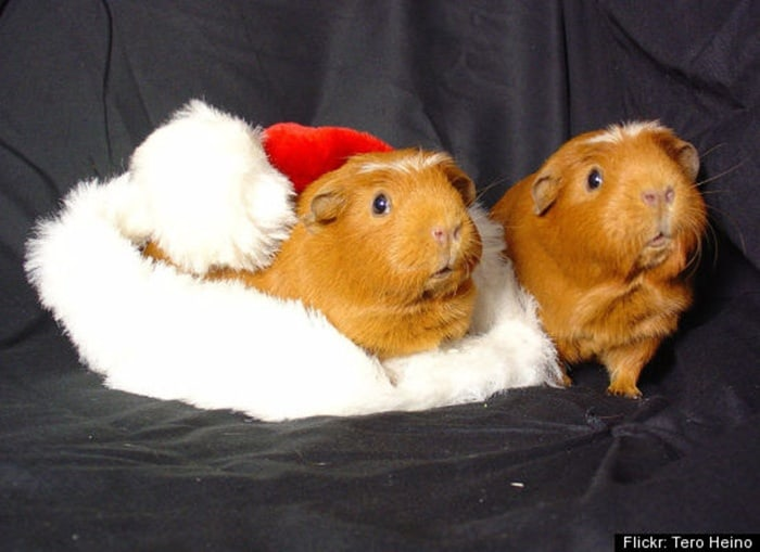 animals in christmas (29)