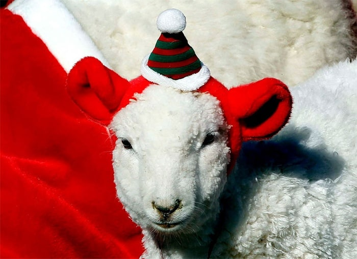 animals in christmas (4)