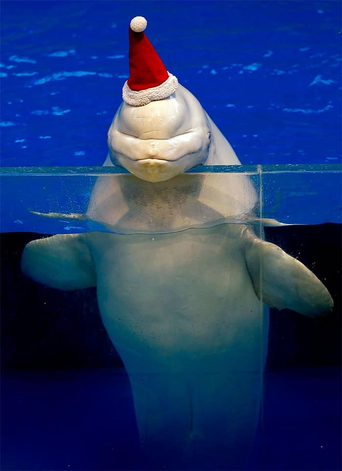 animals in christmas (5)