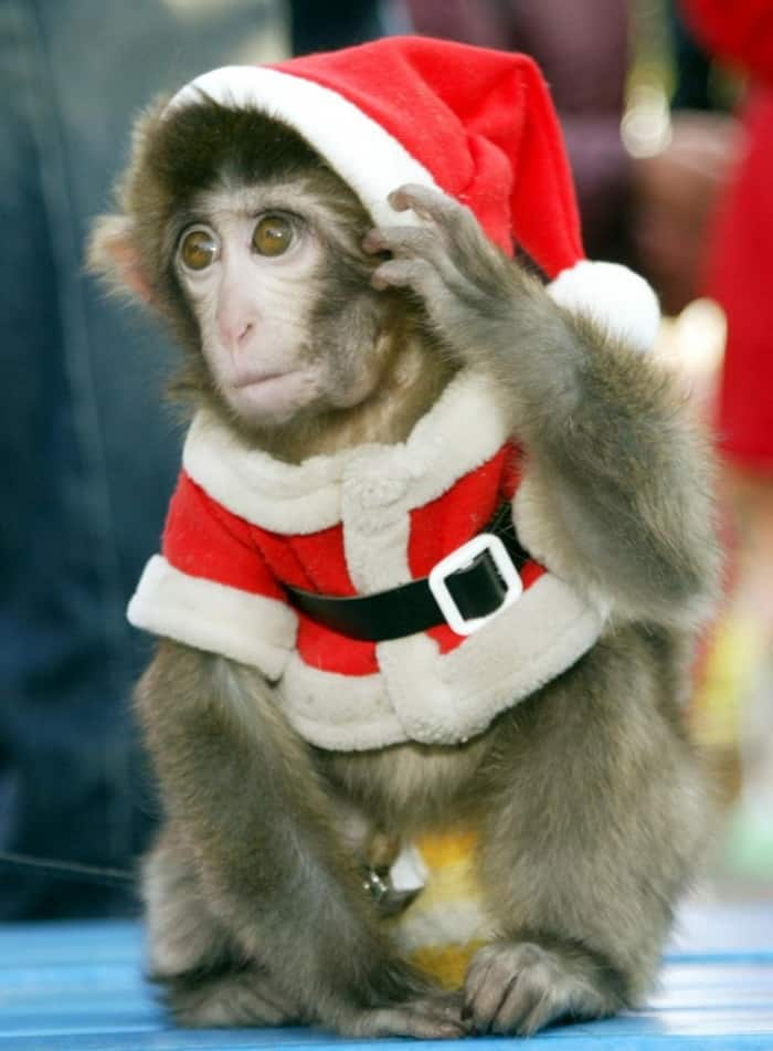 animals in christmas (7)