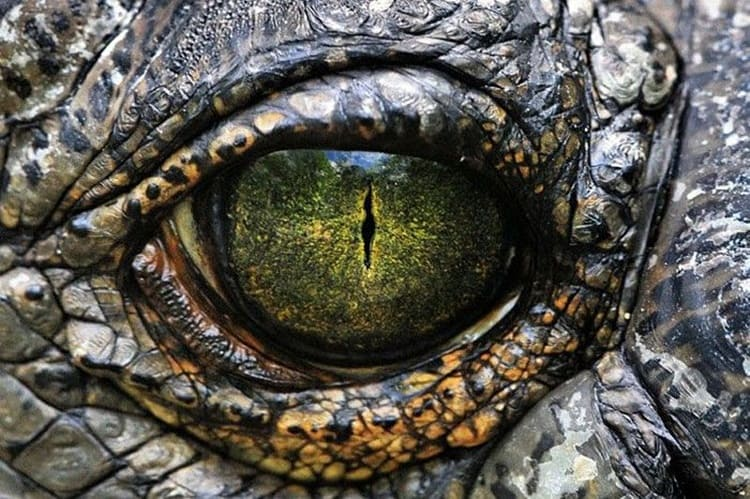 animals with beautiful eyes (1)