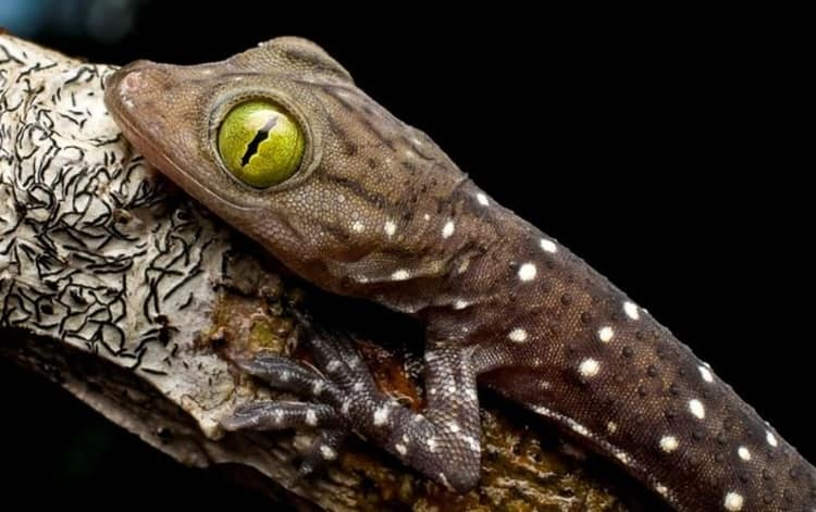 animals with beautiful eyes (10)
