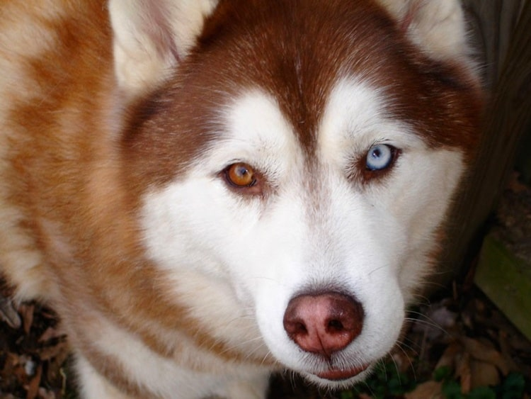 animals with beautiful eyes (13)