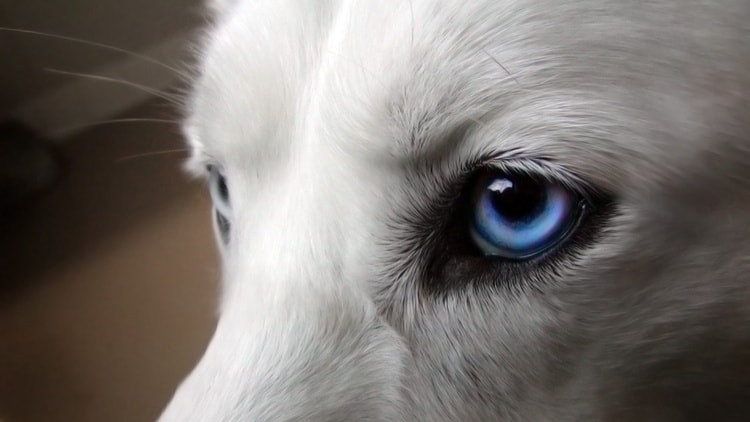 animals with beautiful eyes (14)