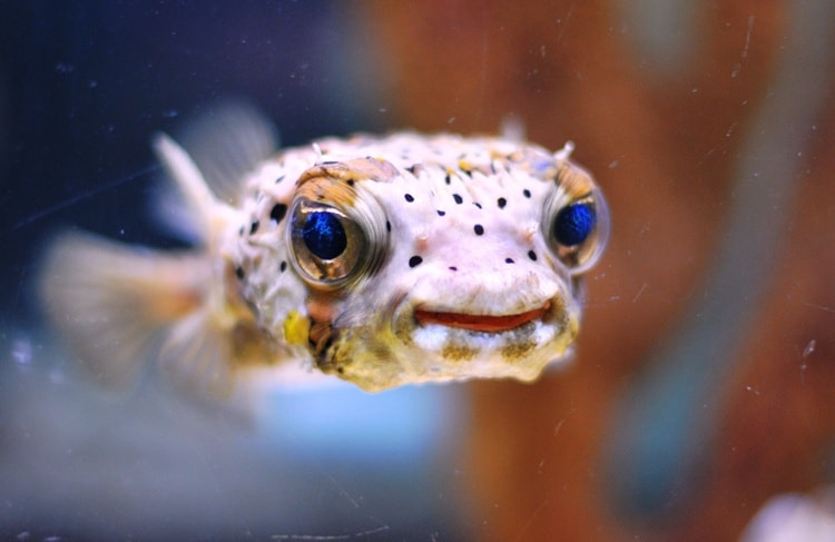 animals with beautiful eyes (15)