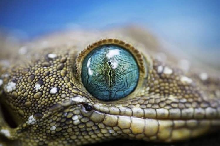 animals with beautiful eyes (16)