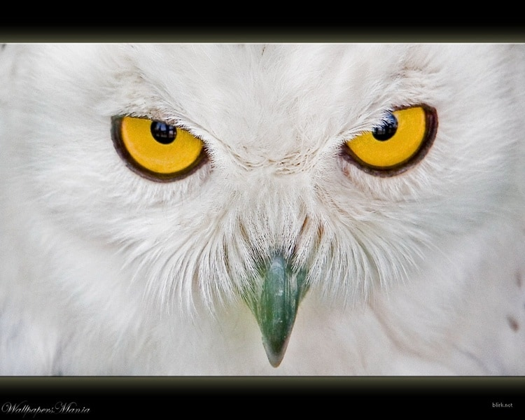 animals with beautiful eyes (18)