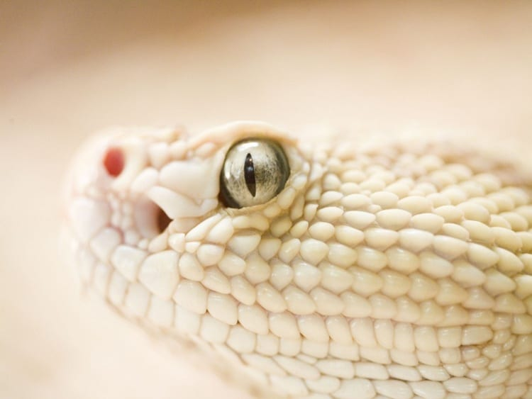 animals with beautiful eyes (19)