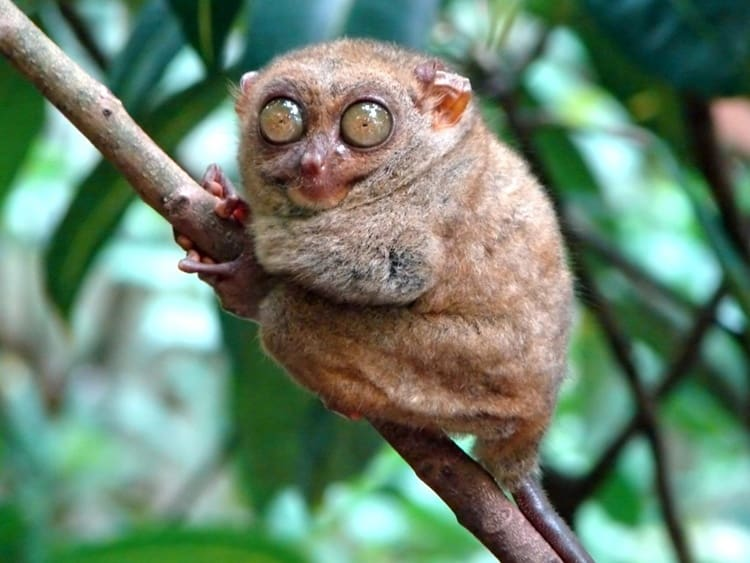 animals with beautiful eyes (2)