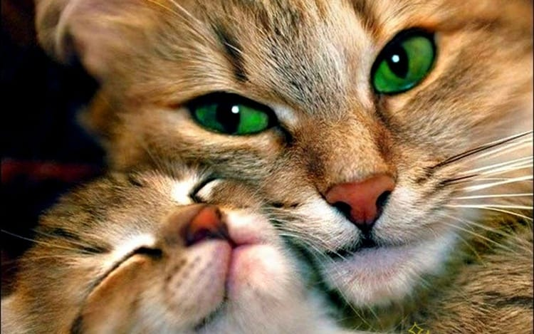 animals with beautiful eyes (22)