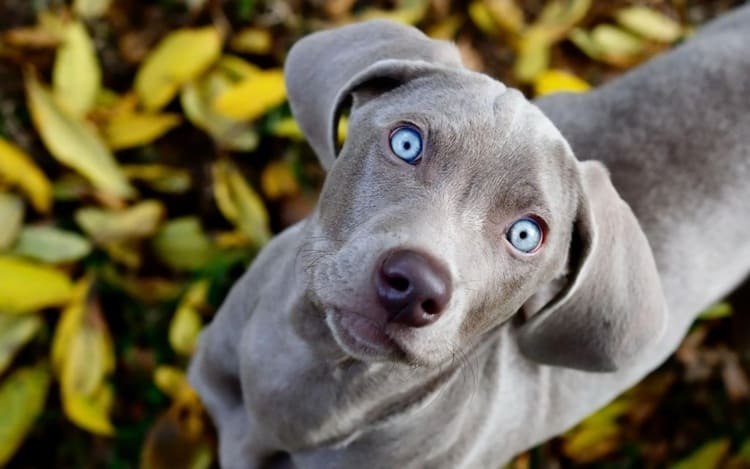 animals with beautiful eyes (24)