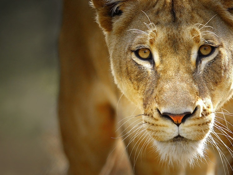 animals with beautiful eyes (3)