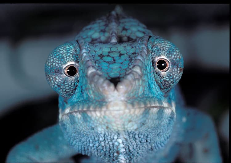 animals with beautiful eyes (6)