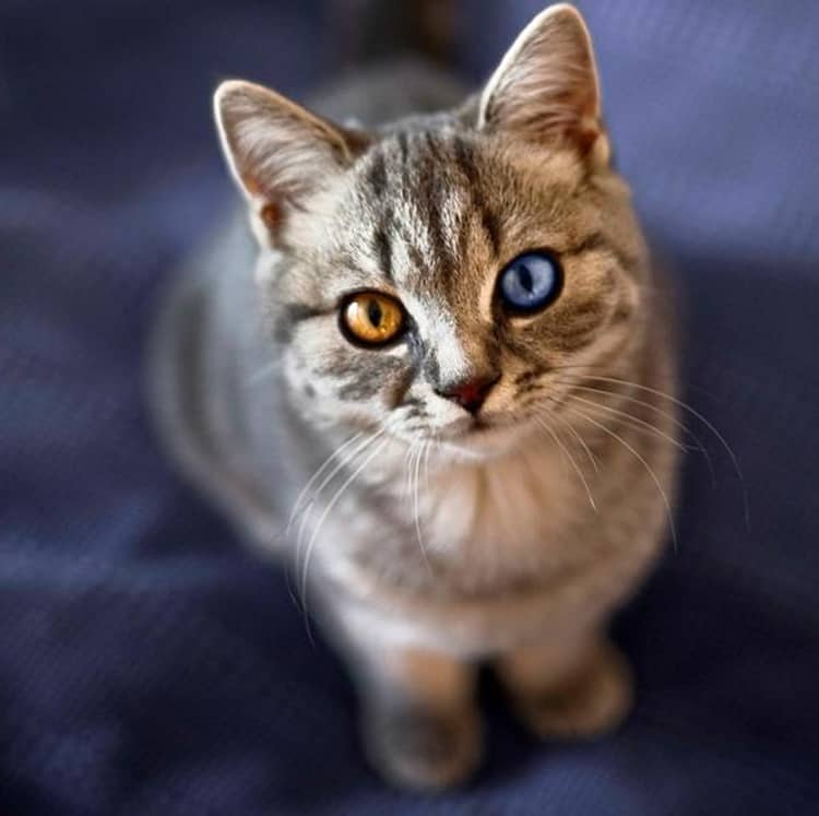 animals with beautiful eyes (9)
