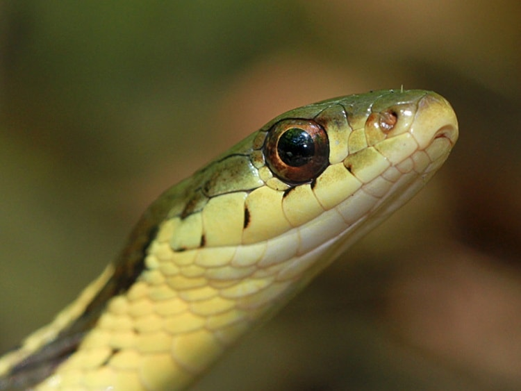 animals with beautiful eyes