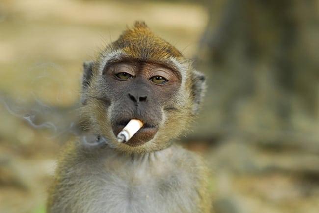 bad monkey (1)