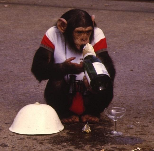 bad monkey (12)