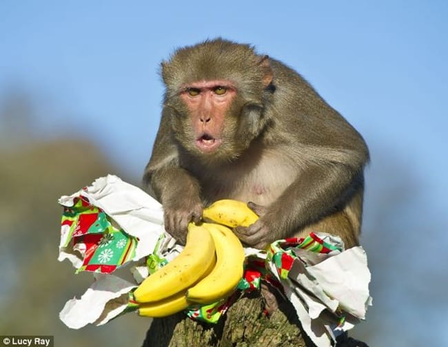 bad monkey (16)