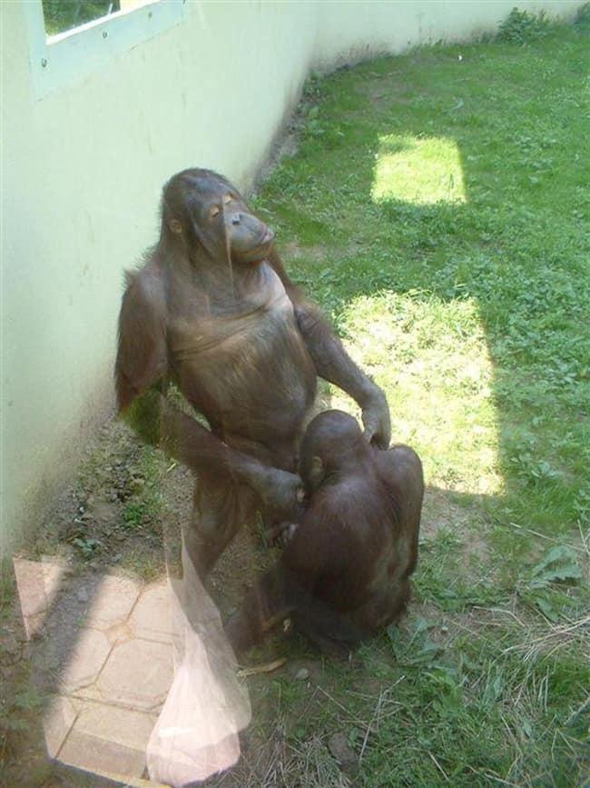 bad monkey (17)