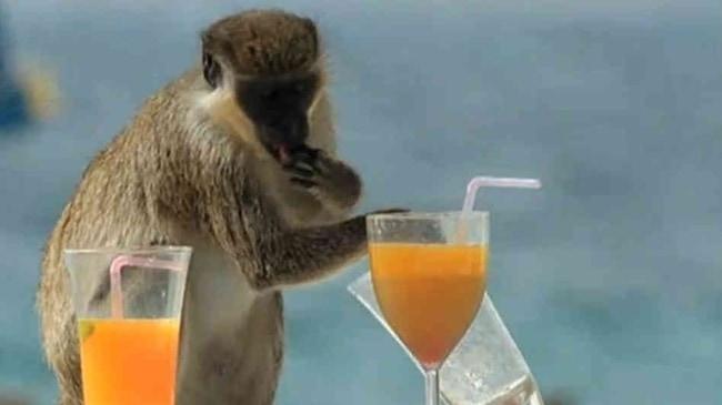 bad monkey (20)