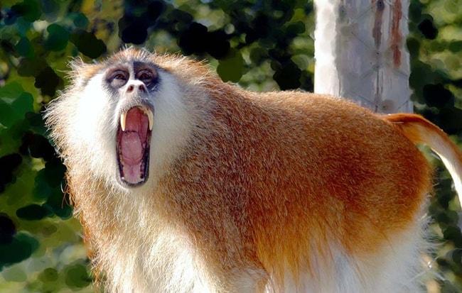 bad monkey (21)