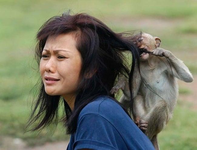 bad monkey (22)