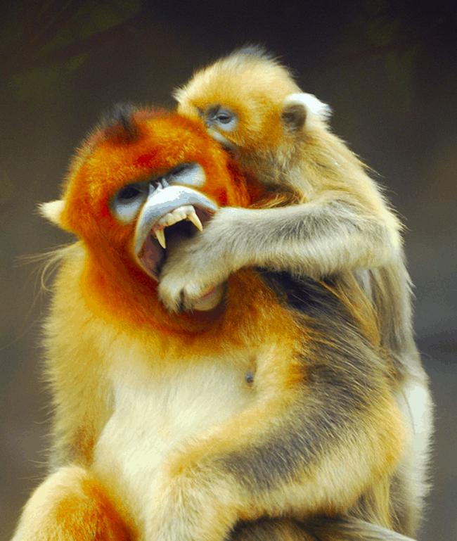 bad monkey (24)
