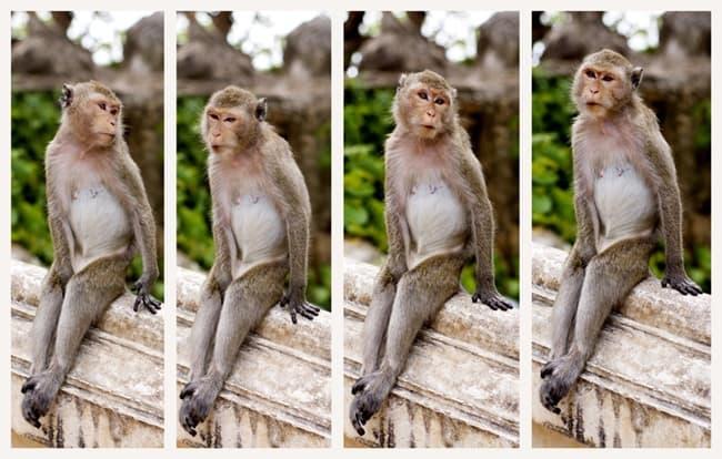 bad monkey (3)