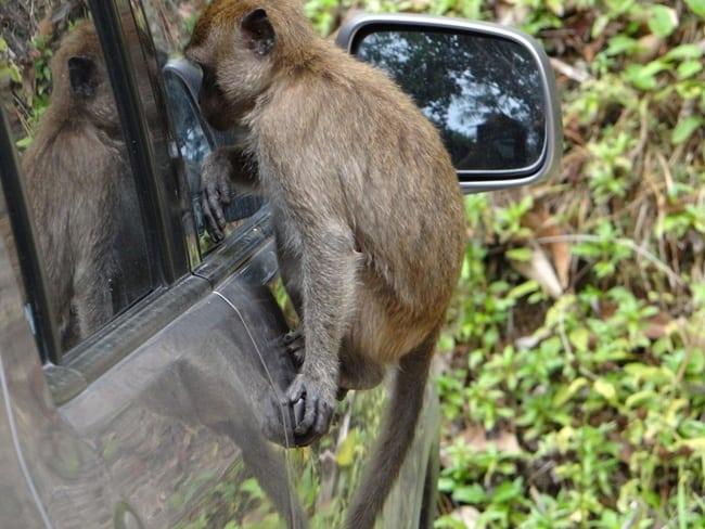 bad monkey (4)