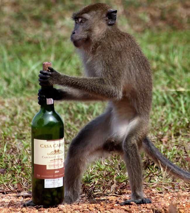 bad monkey (5)