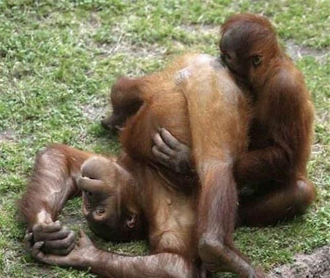 bad monkey (7)