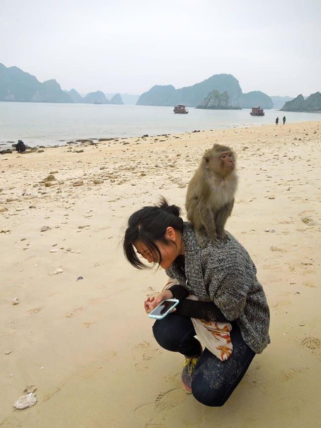 bad monkey (9)