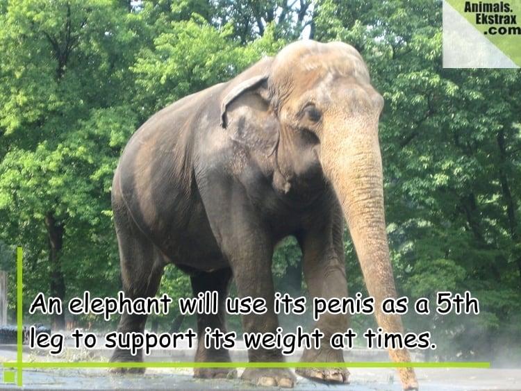 elephant-header-image