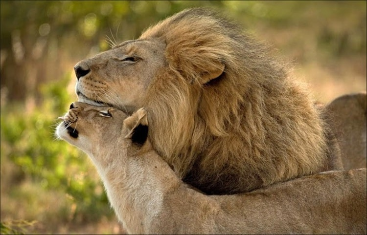 king and queen (10)