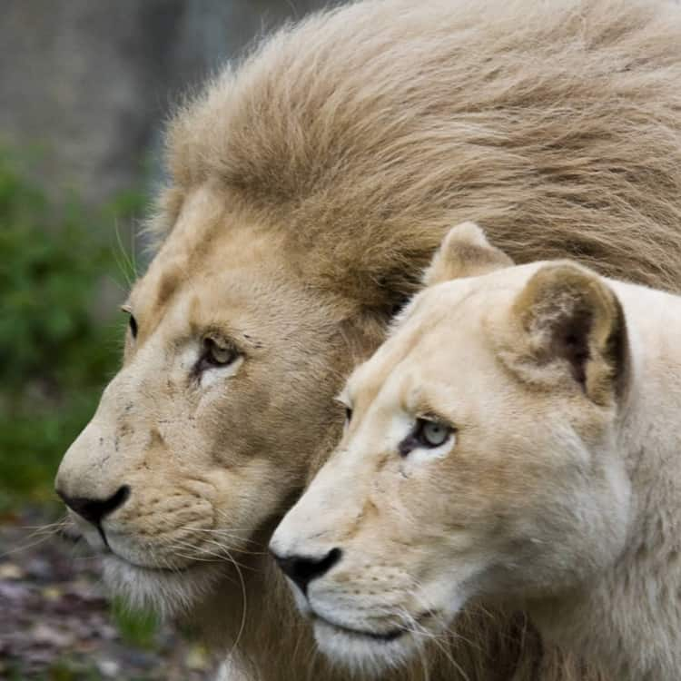 king and queen (7)