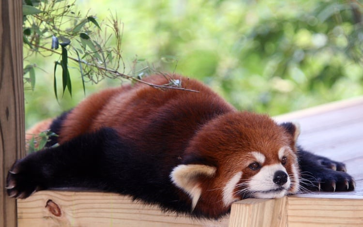 lazy animals pictures (27)