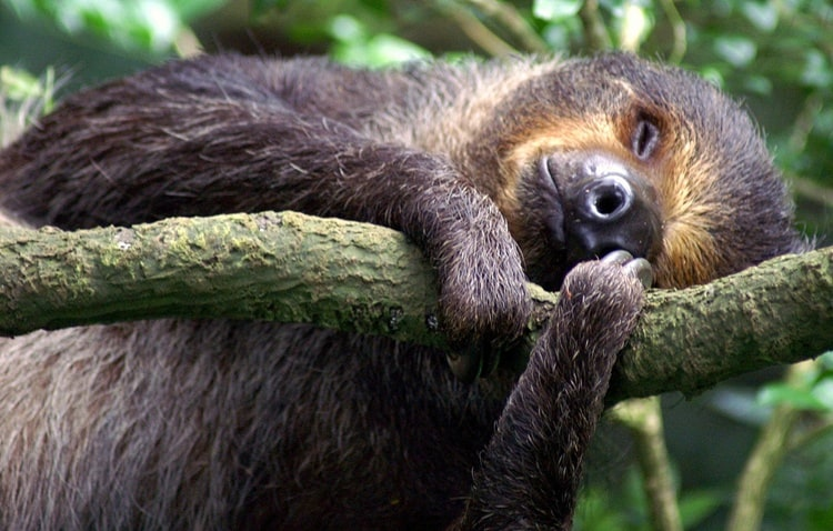 lazy animals pictures (7)