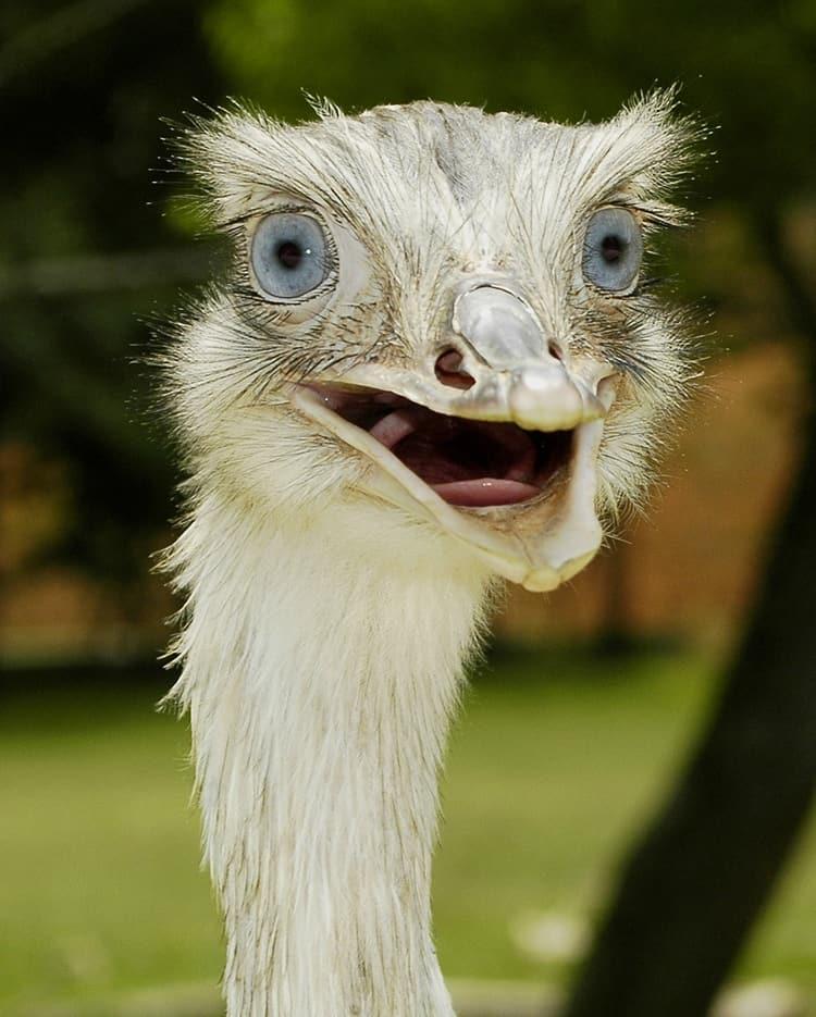 surprised animals (25)