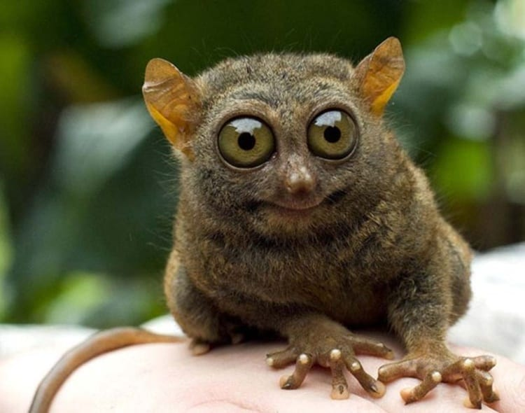 surprised animals (4)