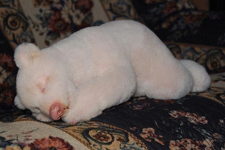 white animals (12)