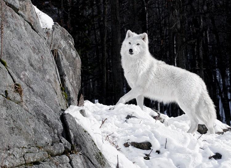 white animals (16)