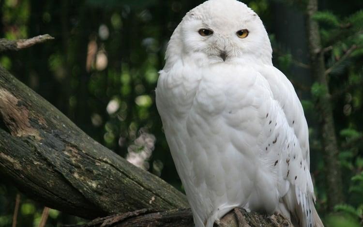 white animals (23)