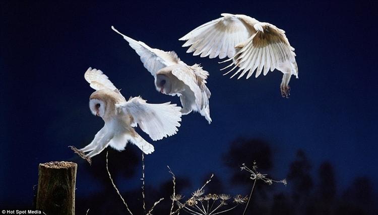 white animals (24)
