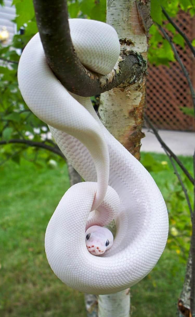 white animals (25)